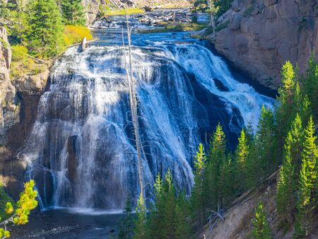 Gibbon Falls is a waterfall on the Gibbon River in northwestern Yellowstone National Park in the United States. Gibbon Falls has a drop of approximately 84 feet (26 m). Banco de Imagens