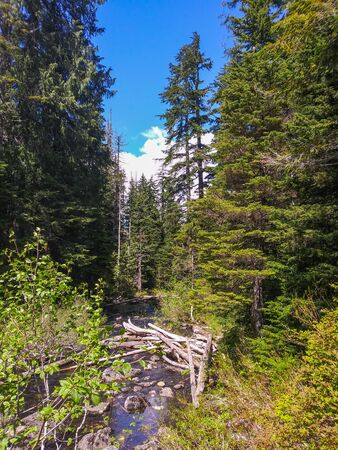 Lake Twentytwo is the center of an oasis of alpine wetland nestled on the northern shoulder of Mount Pilchuck. The hike to lake combines mountain rainforests, old-growth, wetlands, and mountain views.