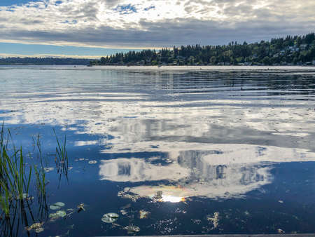 Juanita Bay Park is primarily a natural preserve surrounding one of Lake Washington's last remaining natural wetlands. Juanita Bay Park abounds with flora and fauna and features views of Forbes Creek Wetland, Juanita Beach and Juanita Bay.