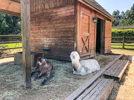 The ranch is home to the animals of Sammamish Animal Sanctuary; a place where formerly homeless, neglected or animals needing a forever home are cared for and loved by many as they live out their lives.
