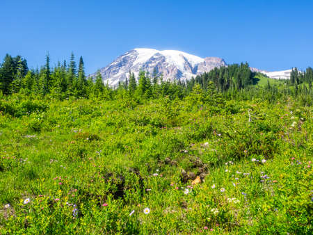 Mount Rainier in the national park.