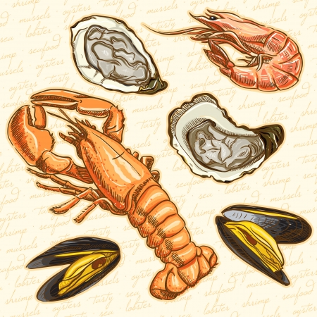 shrimp: seafood  Set lobster, oysters, mussels and shrimp Illustration