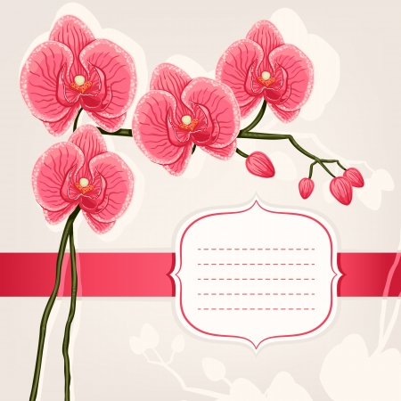 beautiful card with pink orchids on a beige background Vector