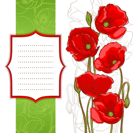 red poppies on a white background with frame with place for text Vector