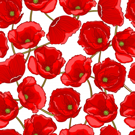 beautiful natural pattern with red poppies on a white background Vector