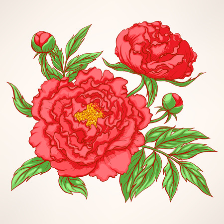 Beautiful hand drawn illustration with red peony bouquet on a beige background
