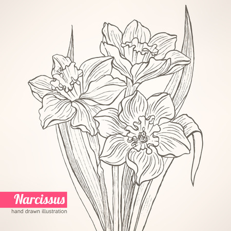 beautiful spring bouquet with hand-drawn narcissus Vector