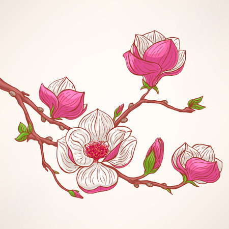 magnolia tree: beautiful background with hand-drawn pink blooming magnolia twig