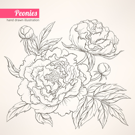 Beautiful hand drawn illustration with peony bouquet on a beige background
