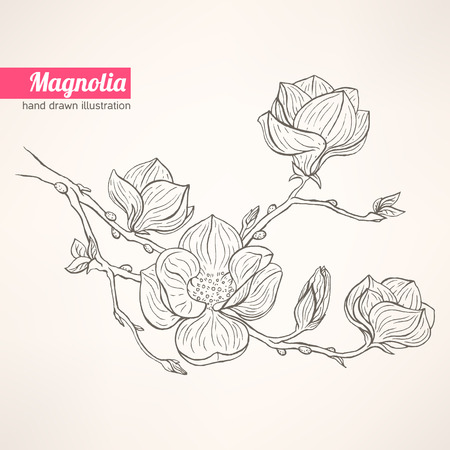 magnolia tree: beautiful background with hand-drawn blooming magnolia twig