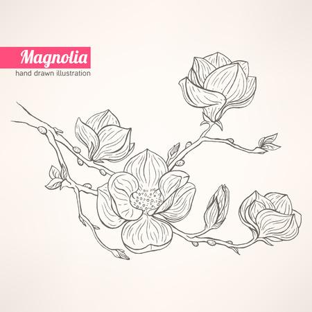 Hermoso fondo con la ramita de magnolia en flor a mano Foto de archivo - 27393238