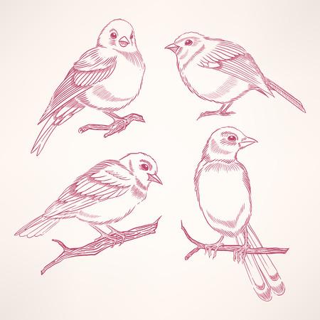 Set of four hand-drawn cute little birds Vector
