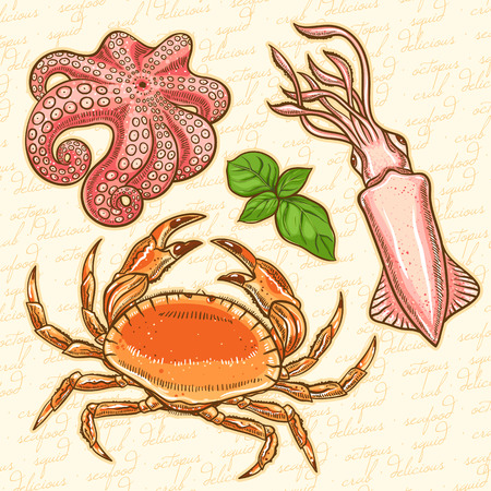 set of three marine animals and basil leaves  squid, crab, octopus on an orange background Vector