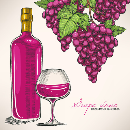 beautiful background with hand-drawn red wine bottle, glass and bunches of grapes 向量圖像