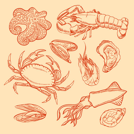 set of marine animals  sketch seafood  squid, crab, octopus, lobster, oysters, mussels and shrimp