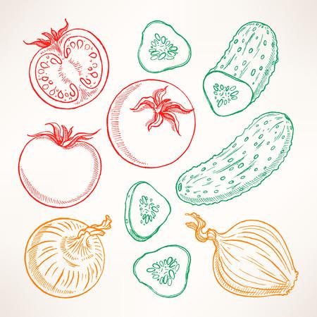 tomates: Set con verduras boceto. Tomates, pepinos, cebollas
