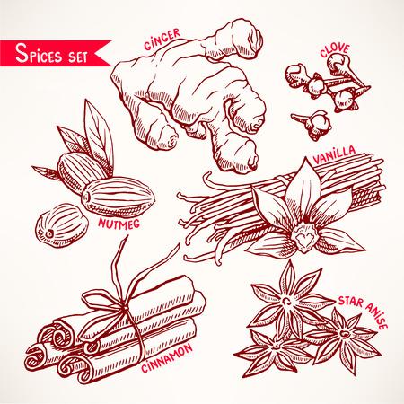 nutmeg: Set with various spices. star anise, ginger and nutmeg. hand-drawn illustration