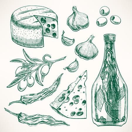 rama de olivo: Conjunto de especias, quesos y verduras. ajo, aceitunas, pimiento. ilustraci�n de mano Vectores
