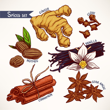 Set with hand-drawn various spices. star anise, ginger and nutmeg. hand-drawn illustration