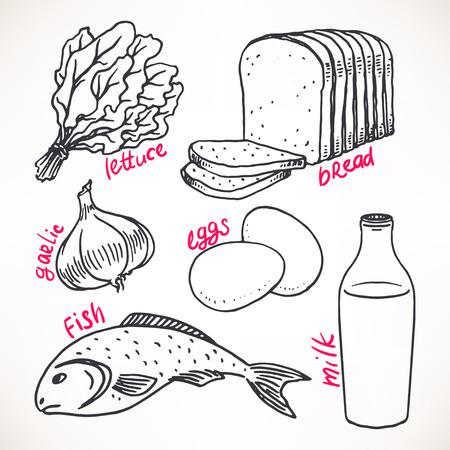illustration of food: Colecci�n de productos de boceto. dibujado a mano ilustraci�n. Iconos de los alimentos Vectores