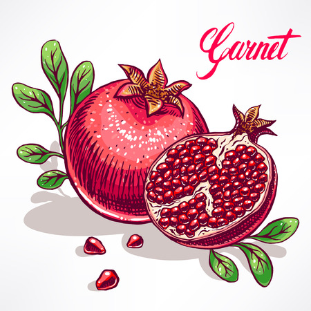 delicious ripe pomegranate with green leaves. hand-drawn illustration Vector