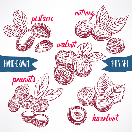 nutmeg: set with a different nuts. hand-drawn illustration