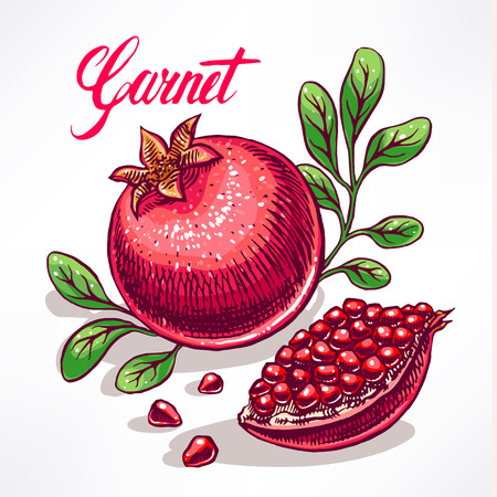 delicious ripe pomegranate with green leaves. hand-drawn illustration - 2 Vector