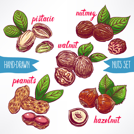 nutmeg: set with a different colorful nuts. hand-drawn illustration