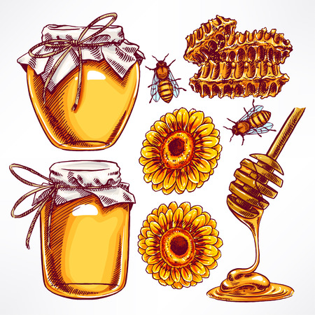 honey: honey set. jars of honey, bees, honeycomb. hand-drawn illustration
