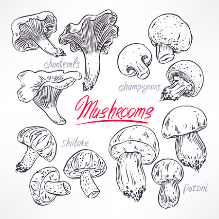 set with a variety of mushrooms. hand-drawn illustration Illustration