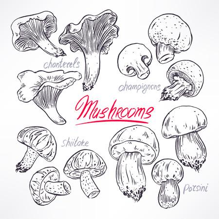 set with a variety of mushrooms. hand-drawn illustration Illustration