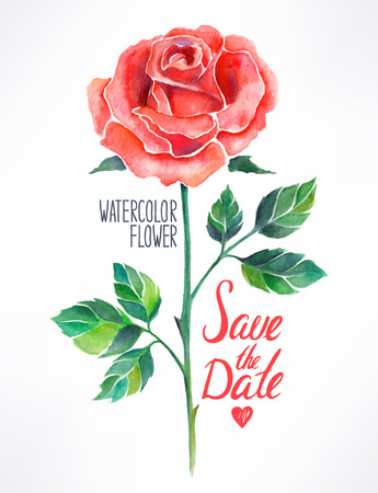 beautiful red rose watercolor. hand-drawn illustration