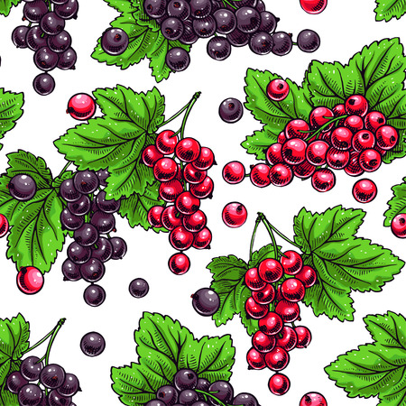 currants: Beautiful seamless background with sprigs of red and black currants
