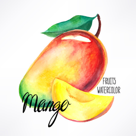 delicious ripe watercolor mango. hand-drawn illustration