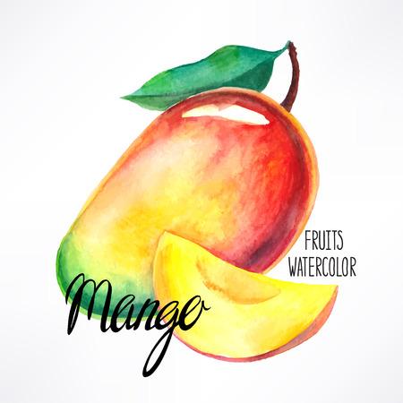 mango slice: delicious ripe watercolor mango. hand-drawn illustration