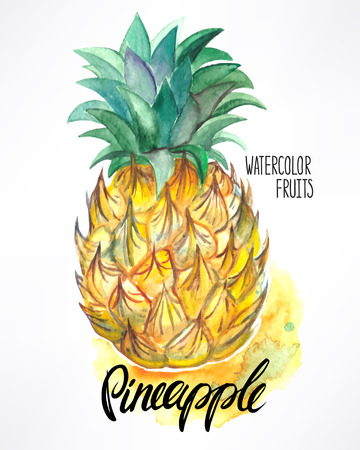 pineapple slice: delicious ripe watercolor pineapple. hand-drawn illustration