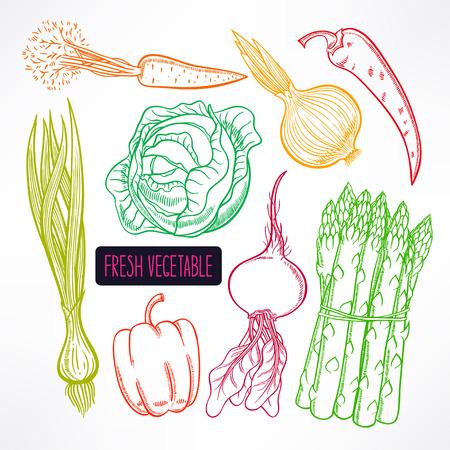autumn vegetables: Set with different colorful autumn vegetables