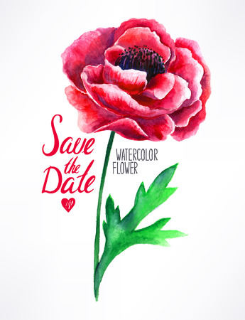 beautiful red poppy watercolor. hand-drawn illustration Vector