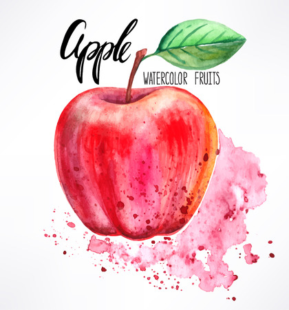 delicious ripe watercolor apple. hand-drawn illustration