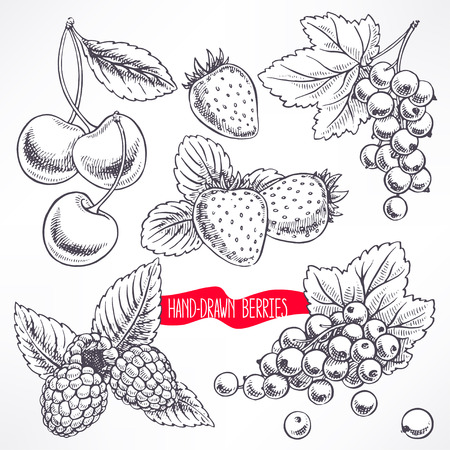 raspberry pink: set with different ripe berries and leaves. hand-drawn illustration
