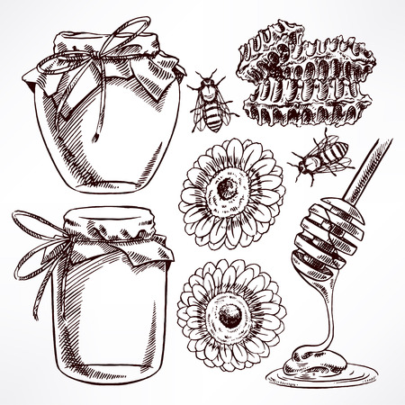bee on white flower: sketch honey set. jars of honey, bees, honeycomb. hand-drawn illustration