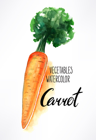 haulm: delicious ripe watercolor carrots. hand-drawn illustration