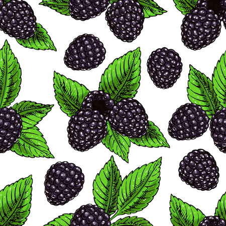 bramble: Cute seamless background with ripe bramble and leaves. hand-drawn illustration