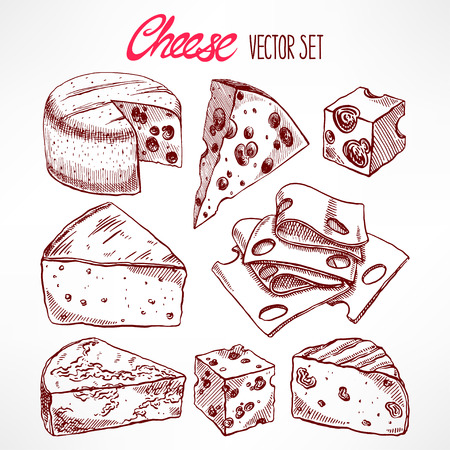 parmesan: Set with various sketch cheeses. hand-drawn illustration Illustration