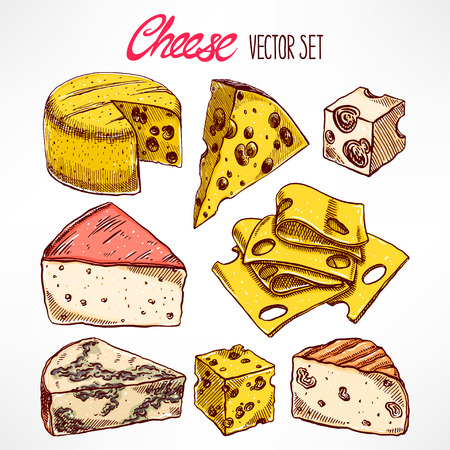 brie: Set with various hand-drawn cheeses. hand-drawn illustration