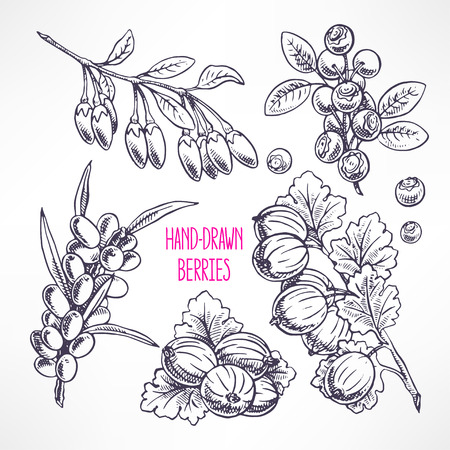 bilberry: set with different ripe berries and leaves. hand-drawn illustration