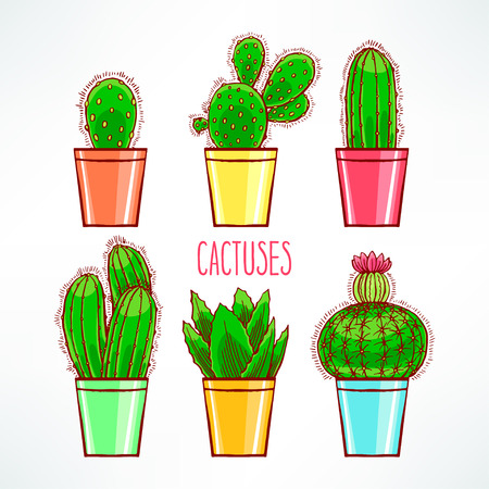 Set of cute little cactuses in colorful flowerpot Vector