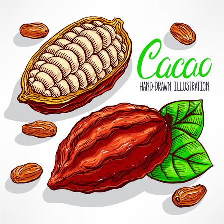 judia verde: granos de cacao, frutas y hojas. ilustración de mano