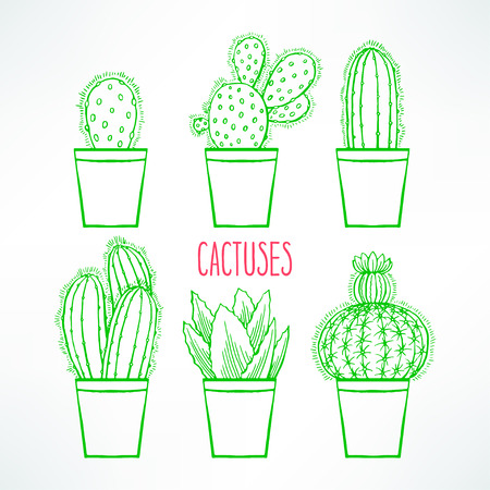 arid: Set of cute little green cactuses in colorful flowerpot