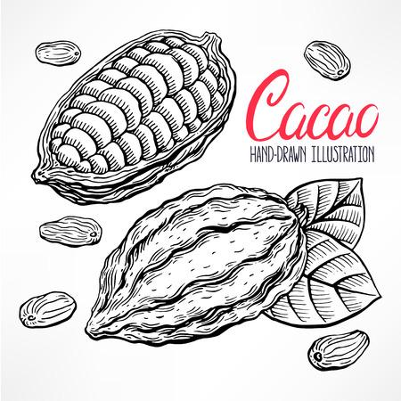 Granos de cacao bosquejo, frutas y hojas. ilustración de mano Foto de archivo - 42604831
